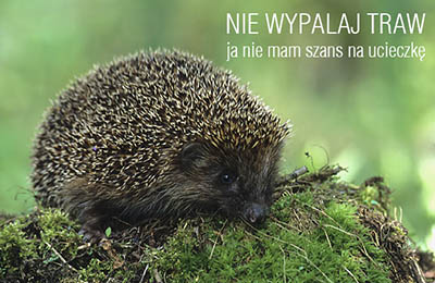 Nie wypalaj traw. Fot: Marek Szczepanek CC by-sa 3.0